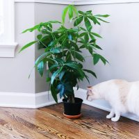 Houseplants Not Toxic To Cats