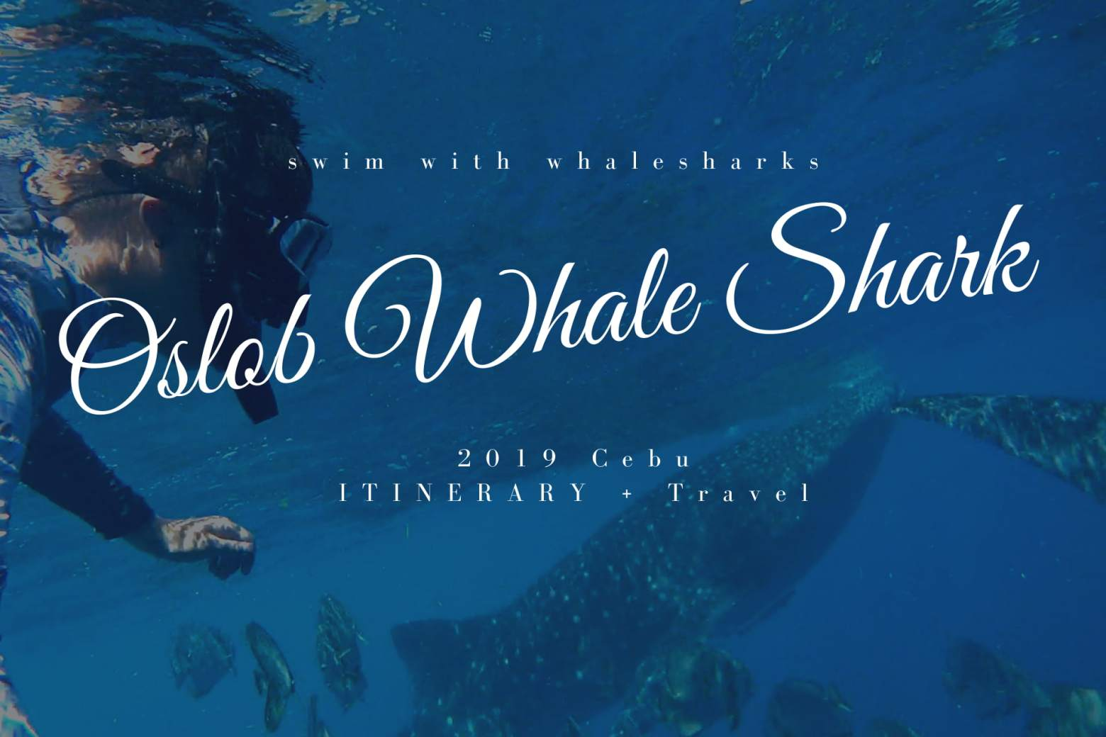 宿霧鯨鯊一日遊》到Oslob鯨鯊共遊吧!一生必訪宿霧小漁村(交通、花費)
