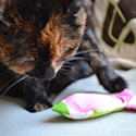 Catnip Fish Toy Tutorial