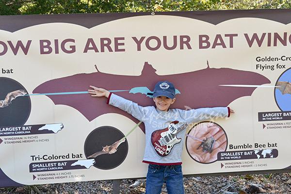 NC Zoo: Batology 101 wingspan Oct 2015