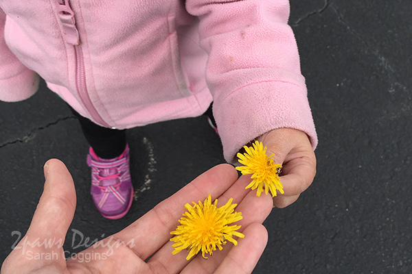 NCMA Park: Dandelions