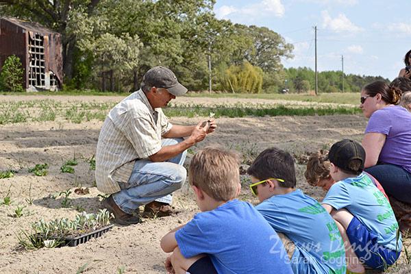 Organic Farm Planting Vegetables