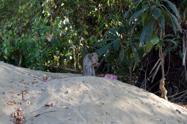 Monkey enjoying someone else's breakfast.