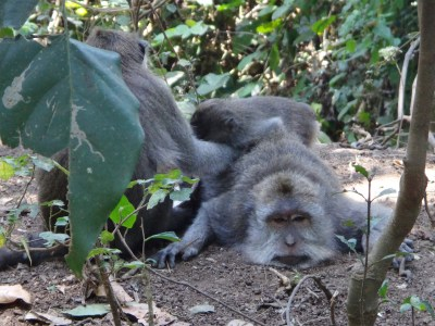 Lazy monkey.