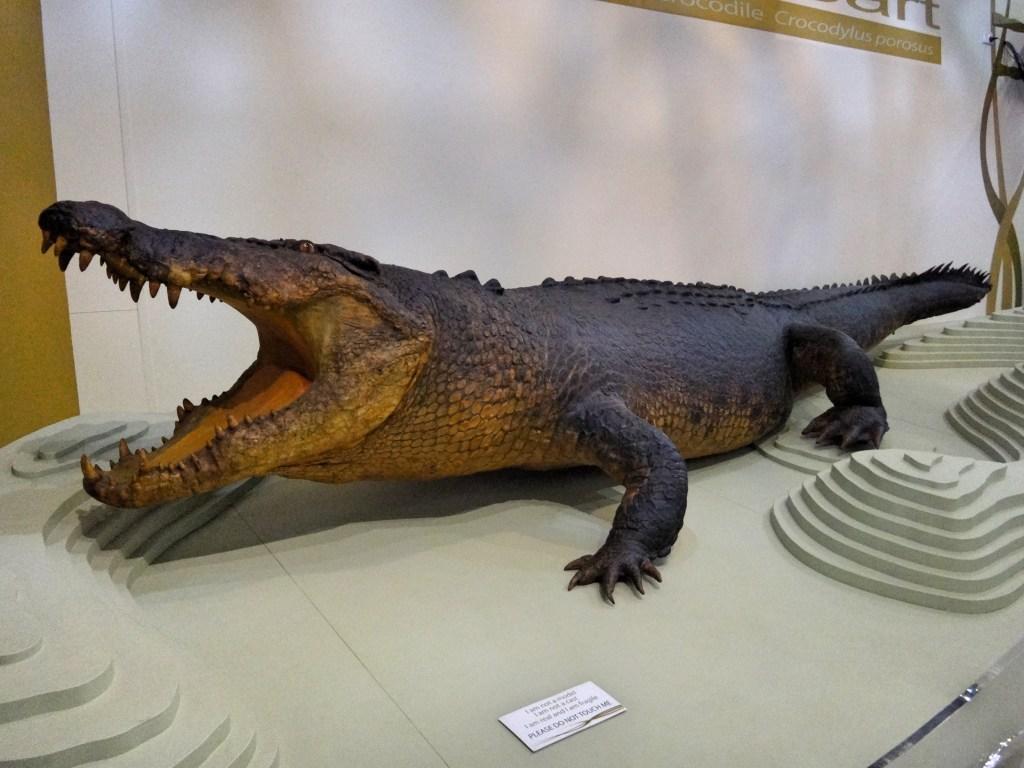 Sweetheart the Crocodile.