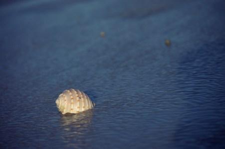Eighty Mile Beach has really big seashells.