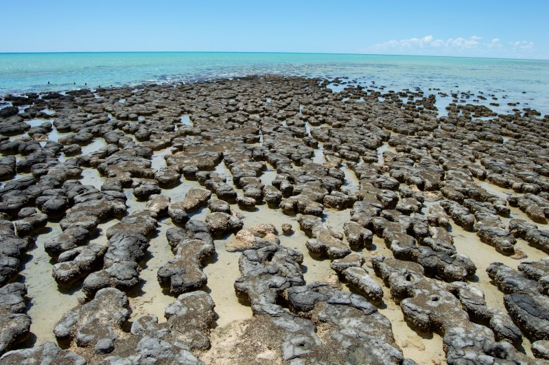 Hamelin stromatolites!