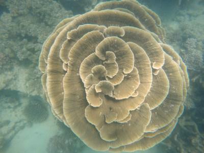 Pretty coral.