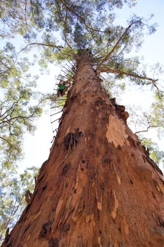 Climbing tree #3: the Diamond Tree.