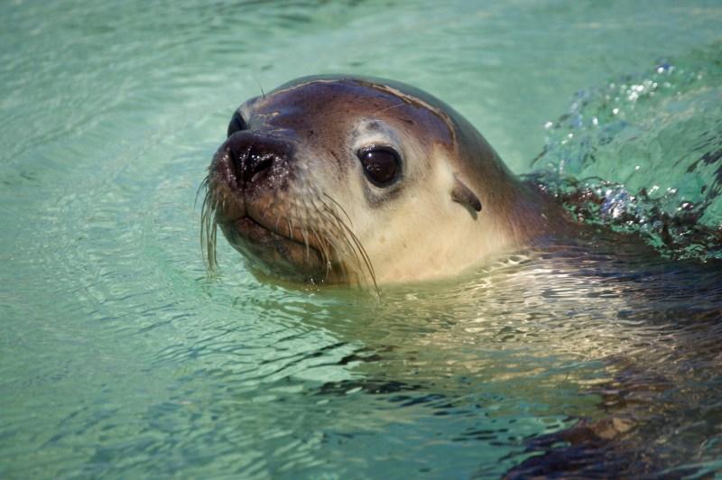 Hello sea lion!