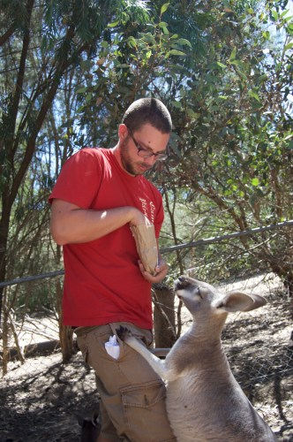Persistent kangaroo.
