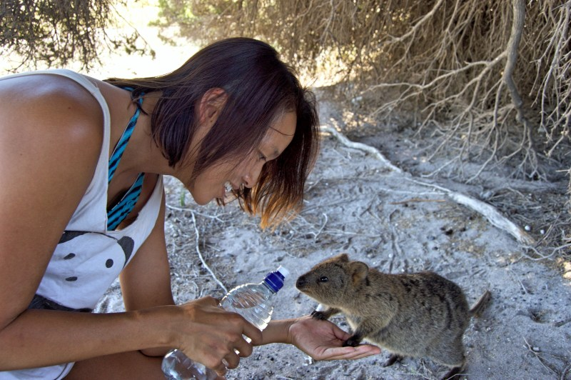 Little quokka would like some water.
