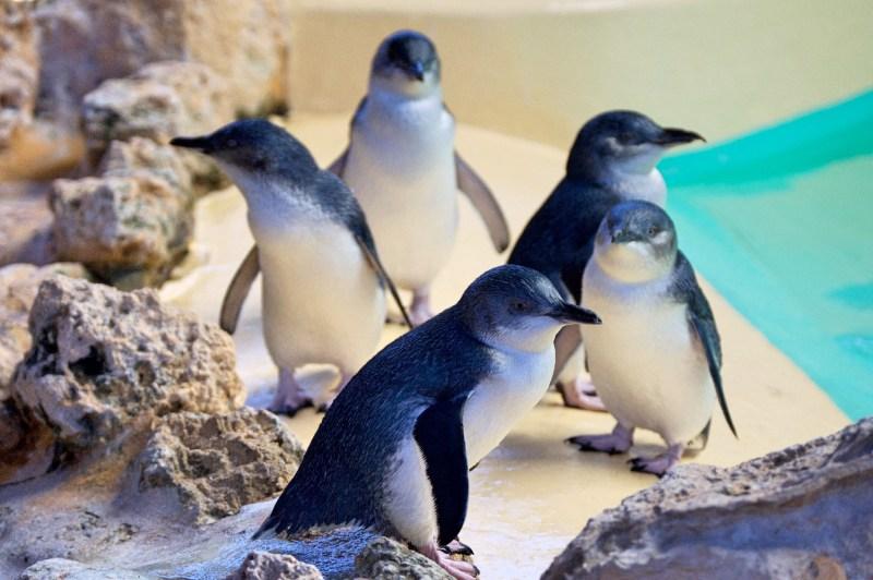 Little penguins!