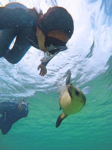 Sea lion selfie!