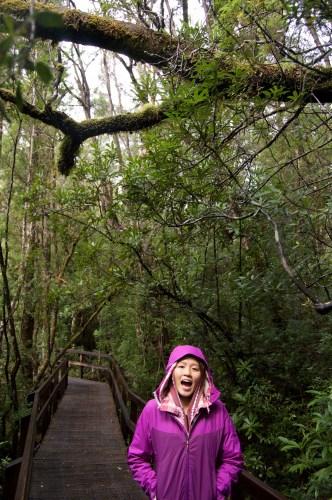 Very rainforest-y.