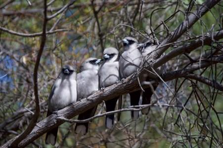 A row of birdies.