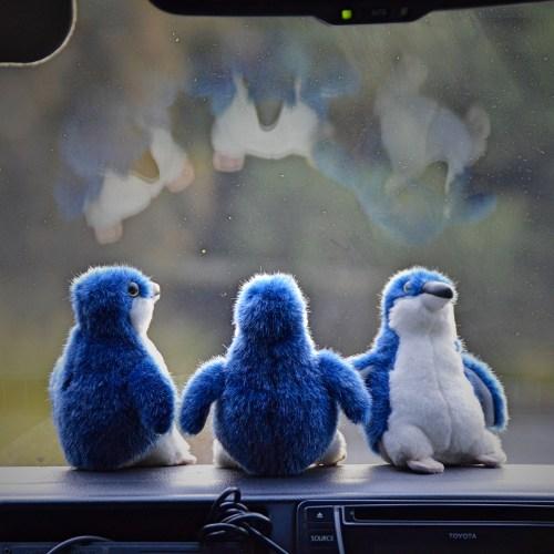Penguin bus!