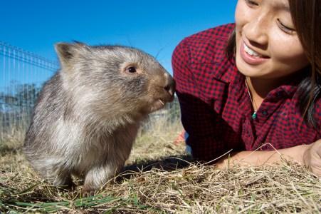 Wombat friend!
