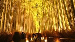Kyoto Arashiyama Hanatourou @ Arashiyama
