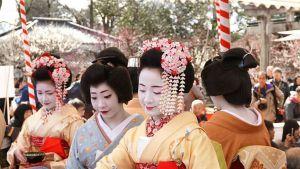 Kitano Tenman-gu Shrine/ Kyoto