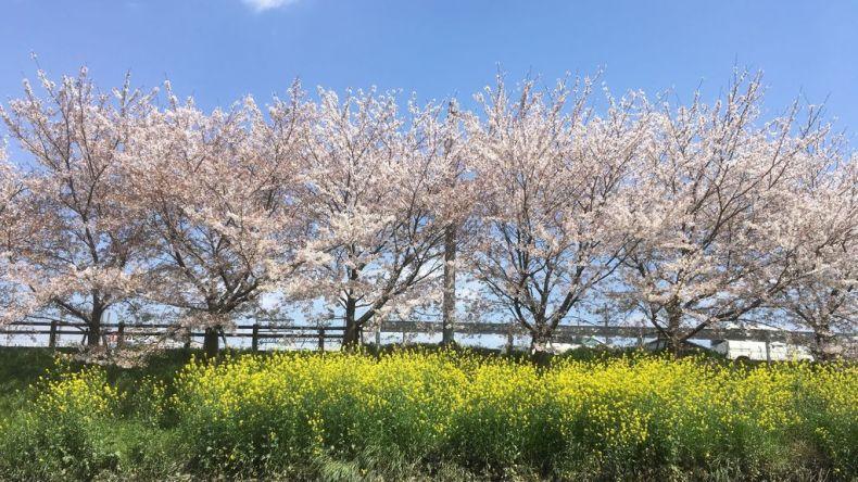 takada sakura