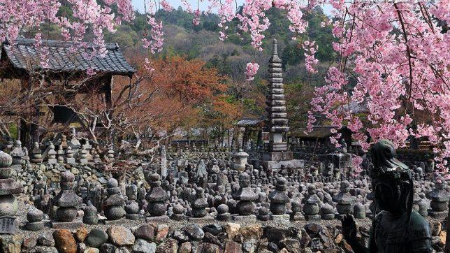 adashino-nenbutsu-ji cherry blossom