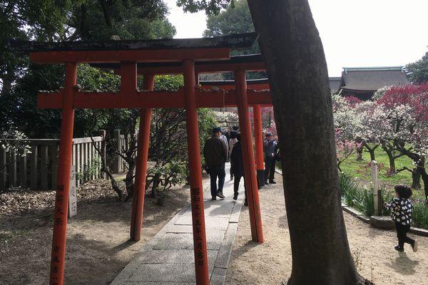 domyoji torii gate