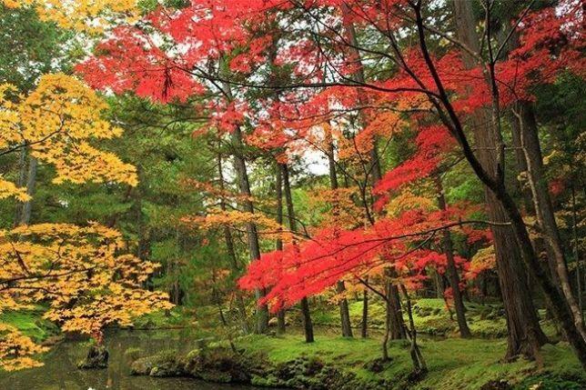 saiho-ji autumn