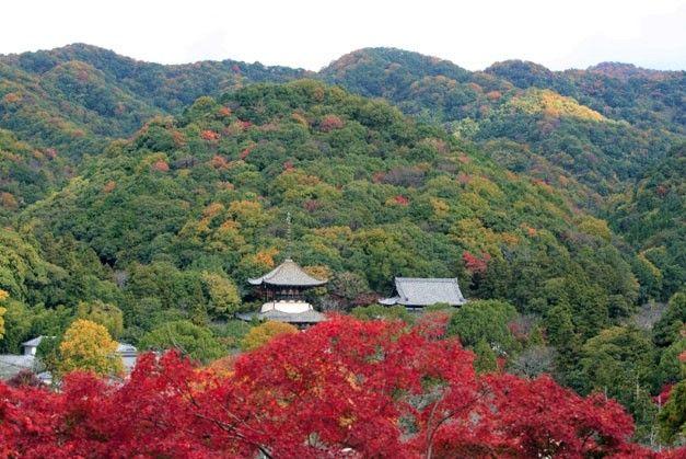 negoro-ji autumn