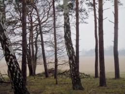 DSCN1774 2011-03-02 bSchwiepke Wald