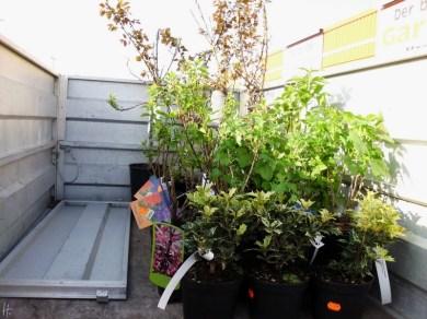 2011-04-18-Sss-057-Pflanzeneinkauf.jpg