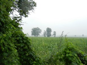 2011-07-03-LchowSss-007-Hopfen.jpg