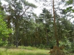 2011-07-12 bMeetschow 129 Wald