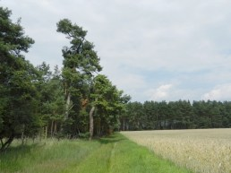 2011-07-12 bMeetschow 136 Wald