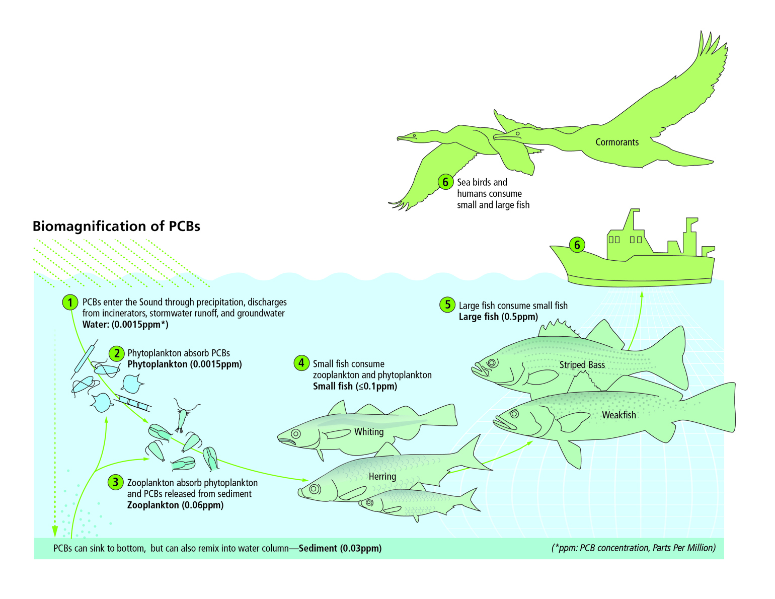 Bioaccumulation Diagram Long Island Sound Study