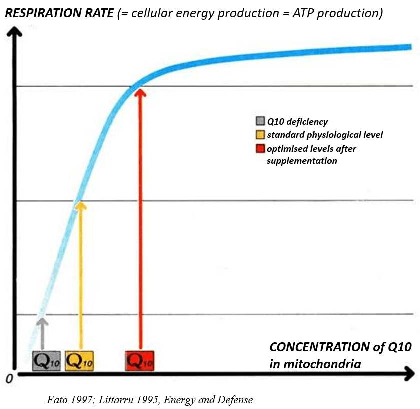 Cellular energy production depends on Q10 levels