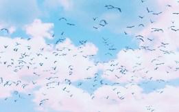 clouds birds 2