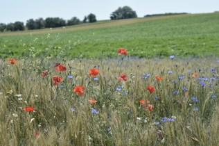 Wild flowers alongside fields