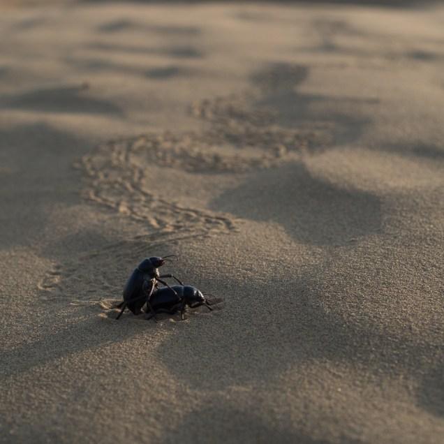 The path to true love never runs straight...