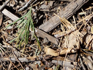Forest Compost