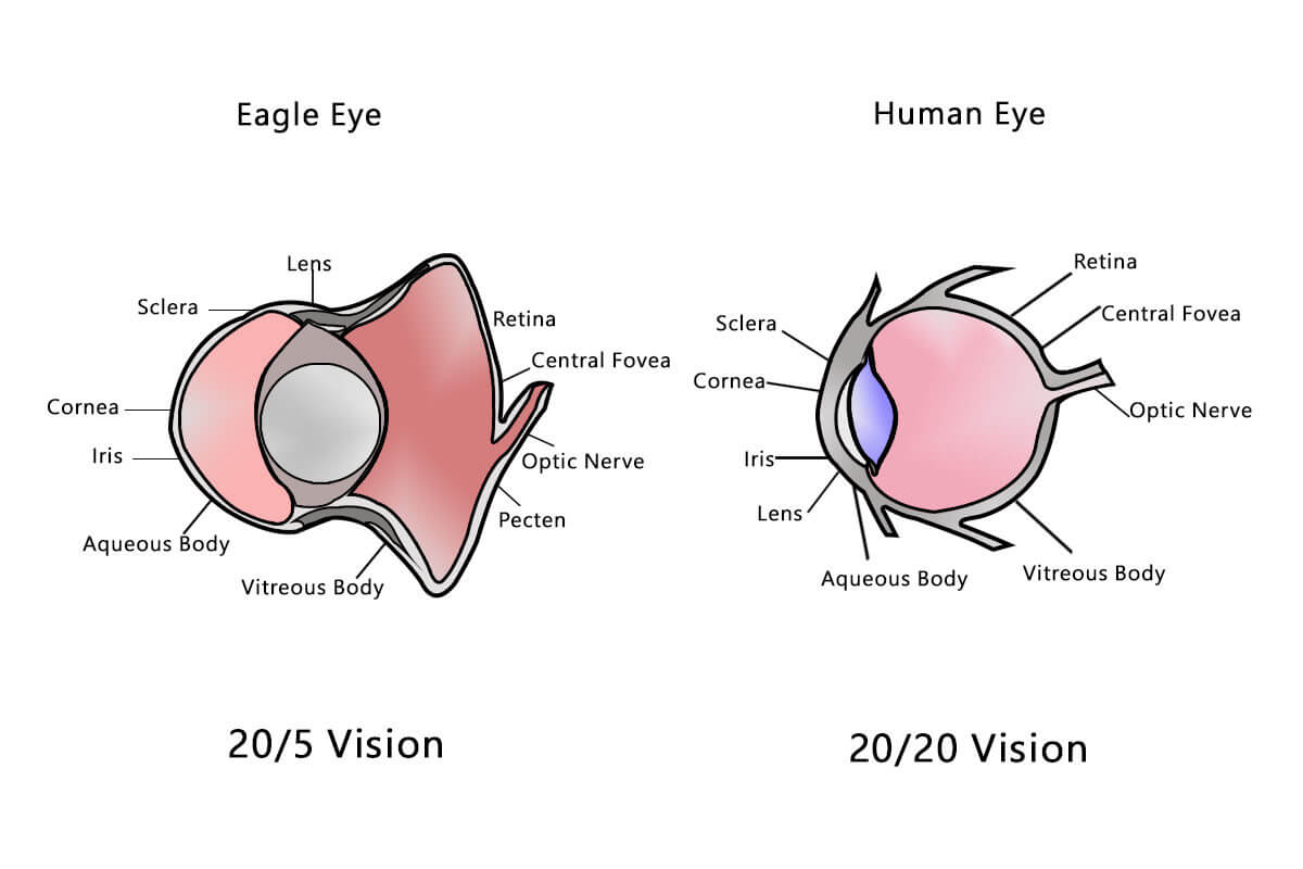 hight resolution of human eye vs eagle eye