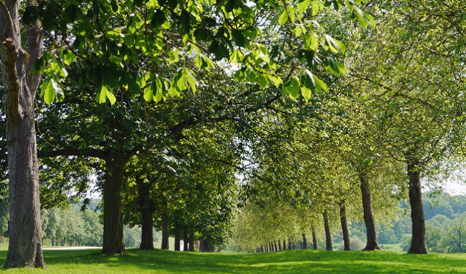 A calming avenue of trees.
