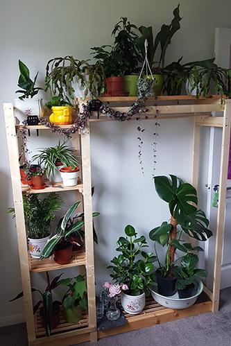 The shelf I made