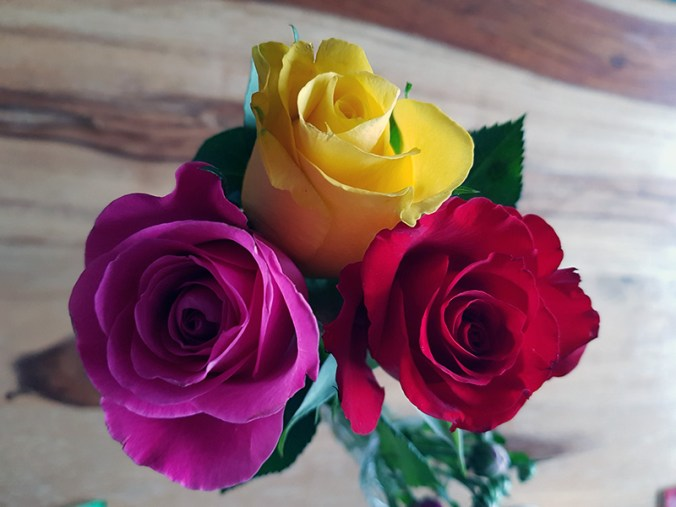 Pink, yellow and red rose