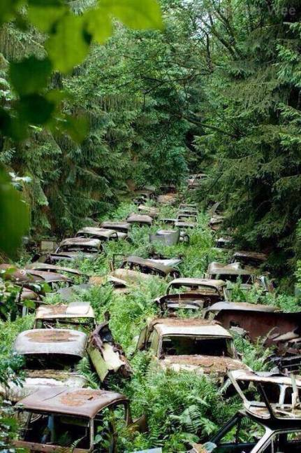 rusting cars_forest