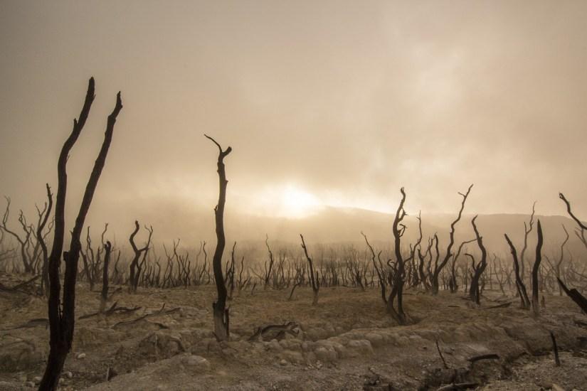 dead-trees_Free-Photos