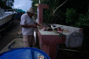 This is one of 2 workers cleaning fish. Behind him you can see the tractor pulling the boat up. On the ground is the biggest needle fish waiting for his turn.