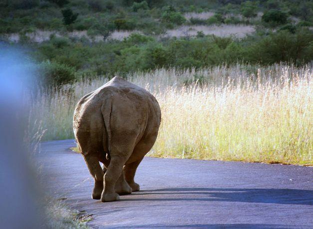 rhino08