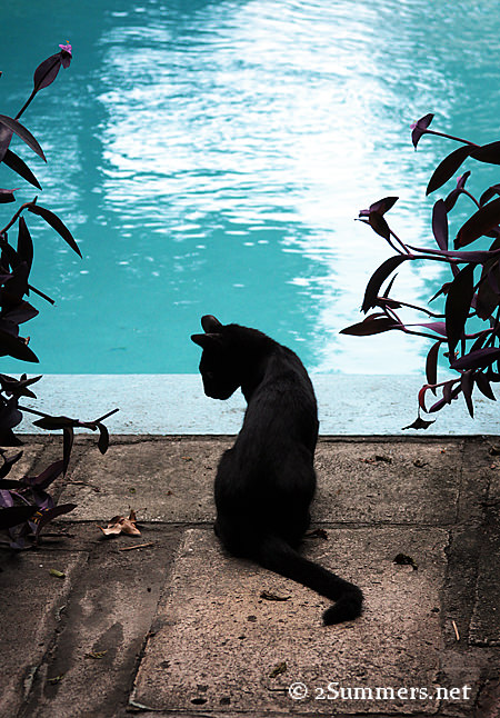 Cat at pool