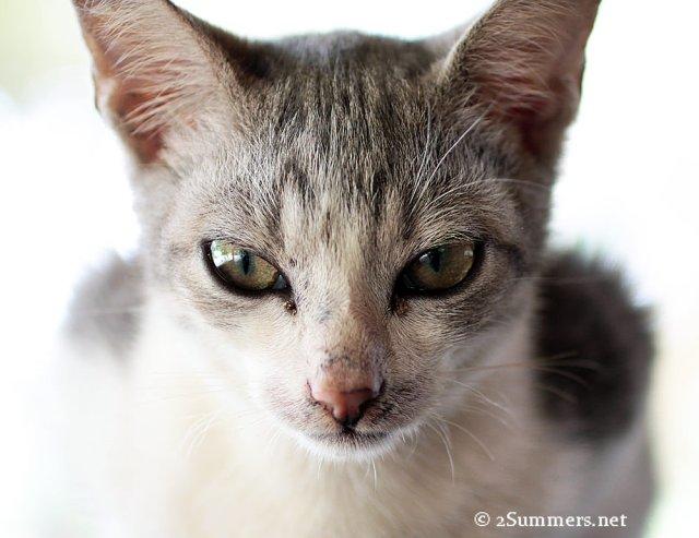 Ezile cat1